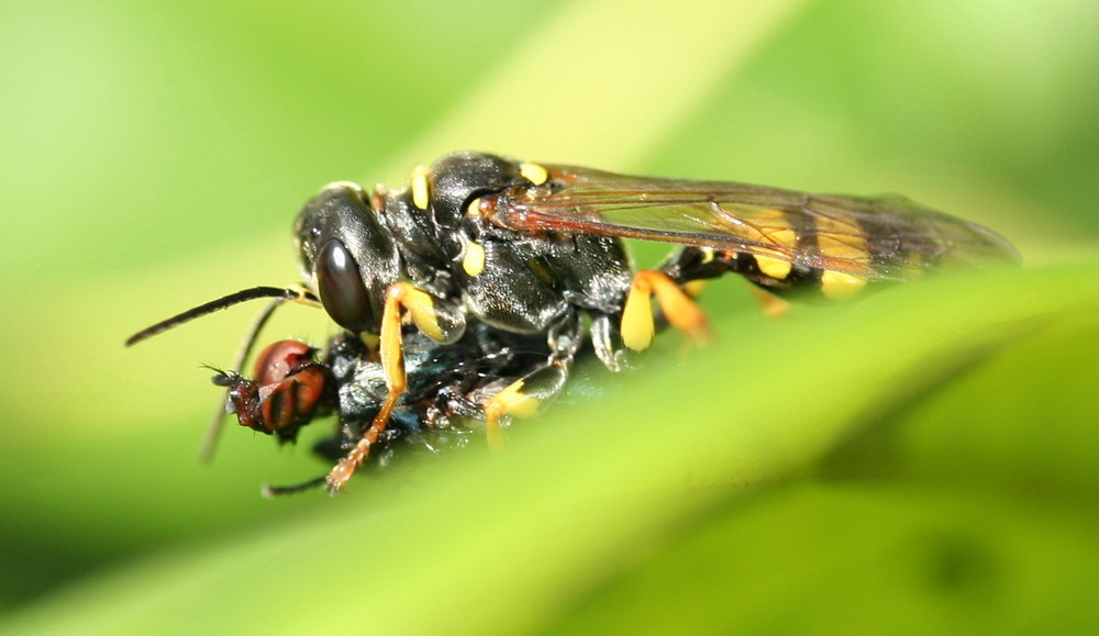 Der Wespe Freud´...der Fliege Leid