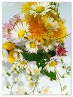"""Der WICHTEL """"Yuri"""" pflückt einen Wiesenblumenstrauß für """"die liebe Tante Alli"""" - iPhone-Foto - V"""