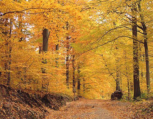 Der Wildtaler Herbst - absolut farbenprächtig!