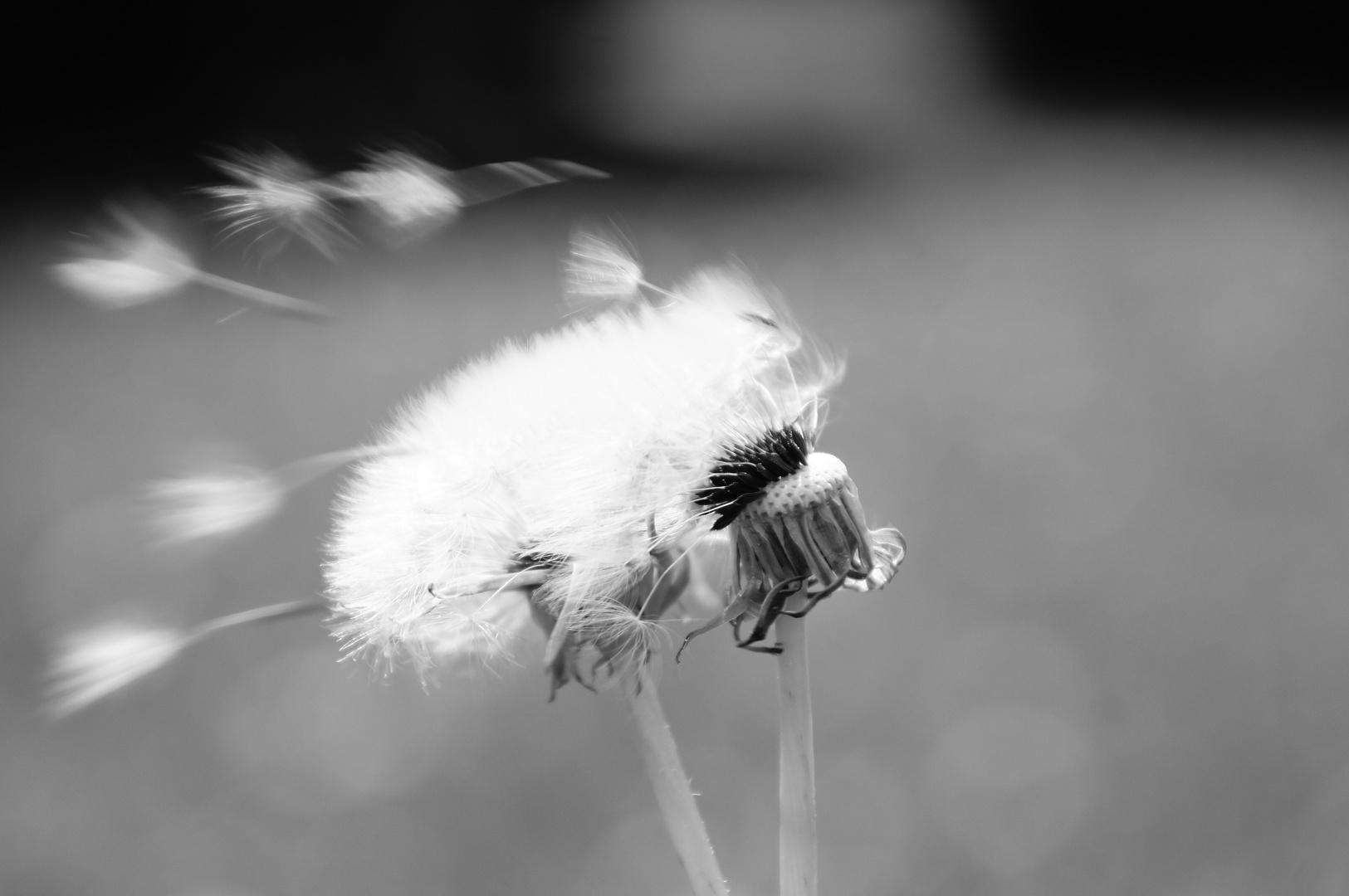 Der Wind, der Wind ...
