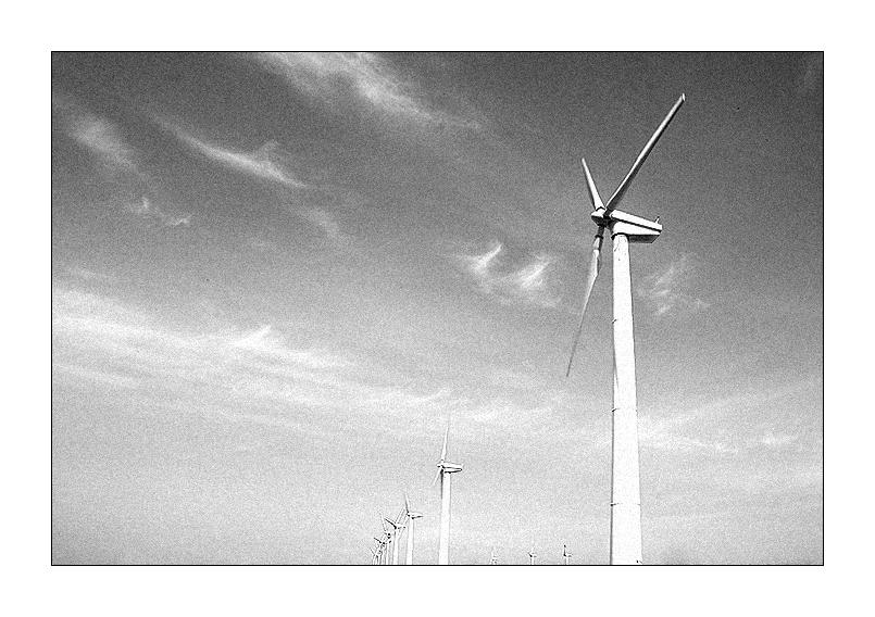 der wind der wind