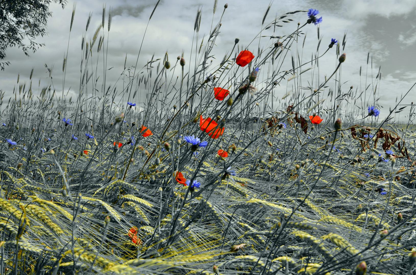 Der Wind im Felde...