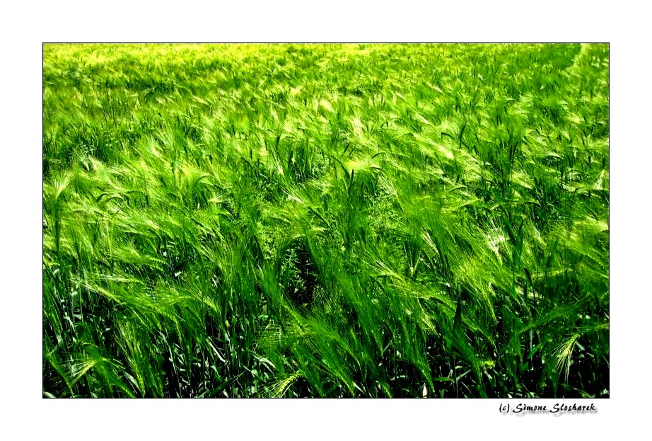 ~ Der Wind in den Feldern ~