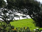 Der Wind in den Weiden