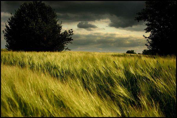Der Wind und das Feld