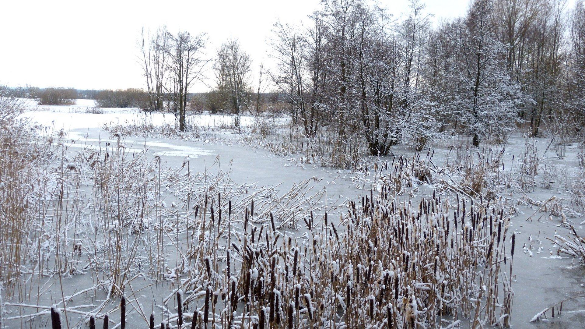 der Winter 13