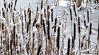 der Winter 2