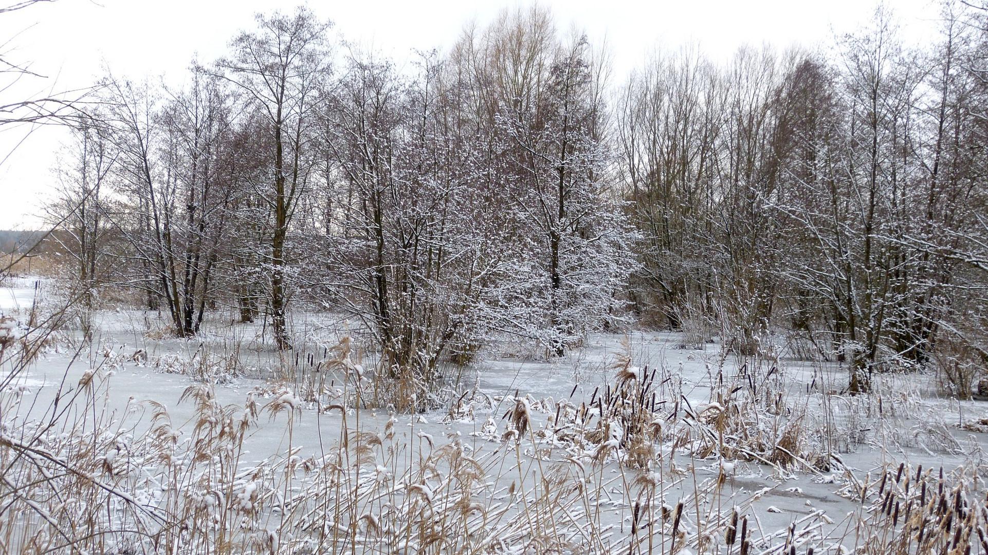der Winter 7