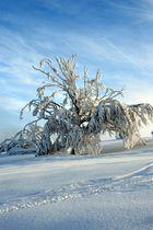 """Der Winter auf dem """"Kahler Asten"""""""