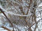 der winter bringt uns tolle erscheinungen