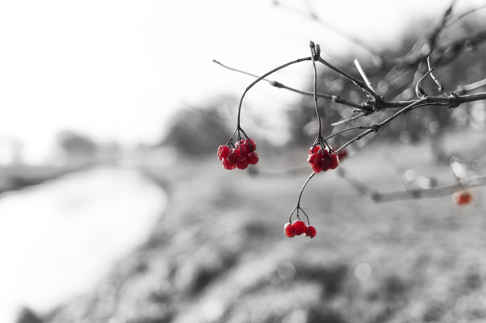 Der Winter geht, der Frühling kommt