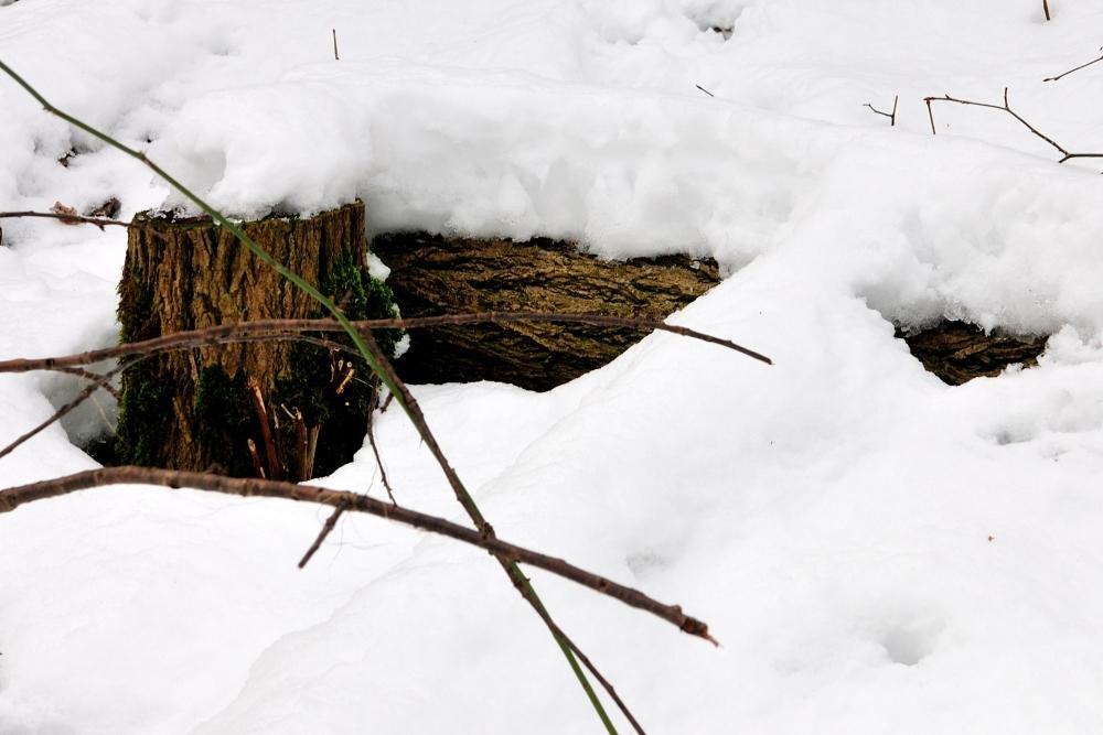 Der Winter geht_2