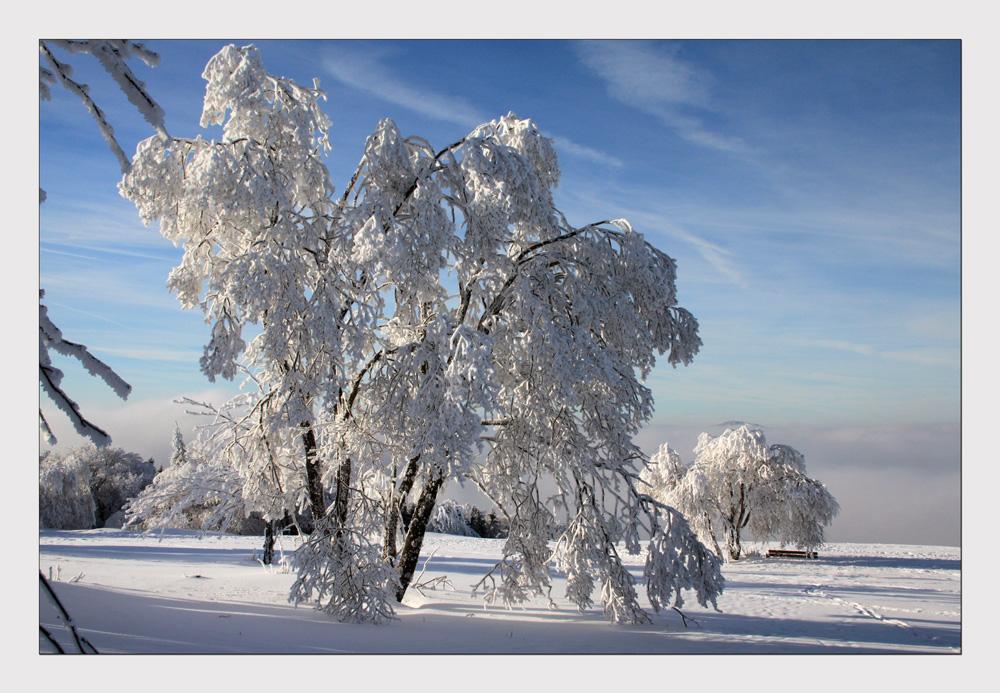 """""""...der Winter hält durch...!"""""""