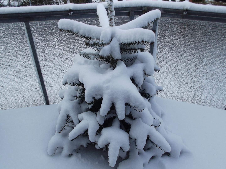 Der Winter hat uns wieder fest im Griff