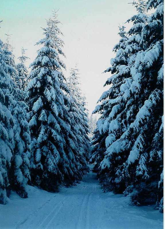 Der Winter im Taunus