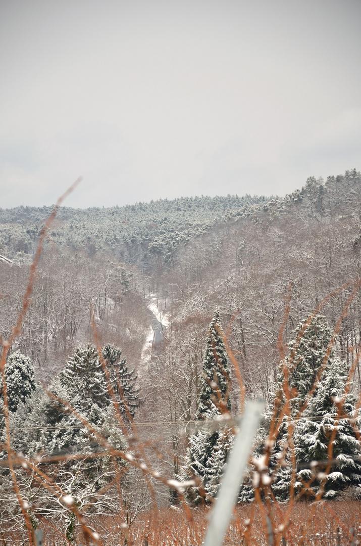 Der Winter im Wald