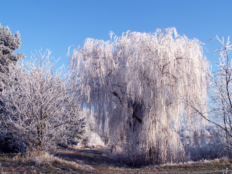 der winter ist nahe :)