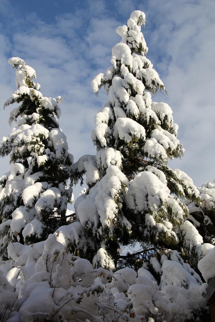 Der Winter ist zurück...