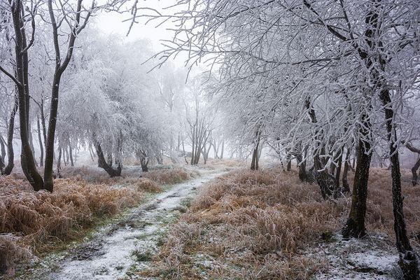 Der Winter kommt bestimmt.