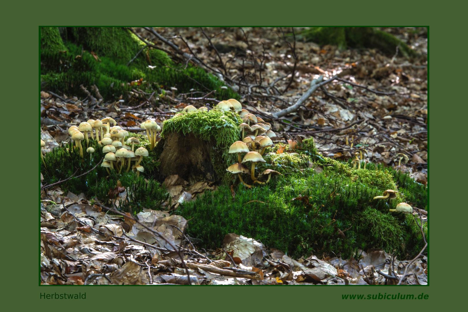 Der Winter kommt, die Pilze rücken häher zusammen