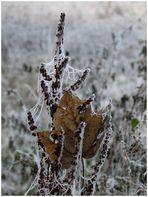 Der Winter lässt grüßen (2)