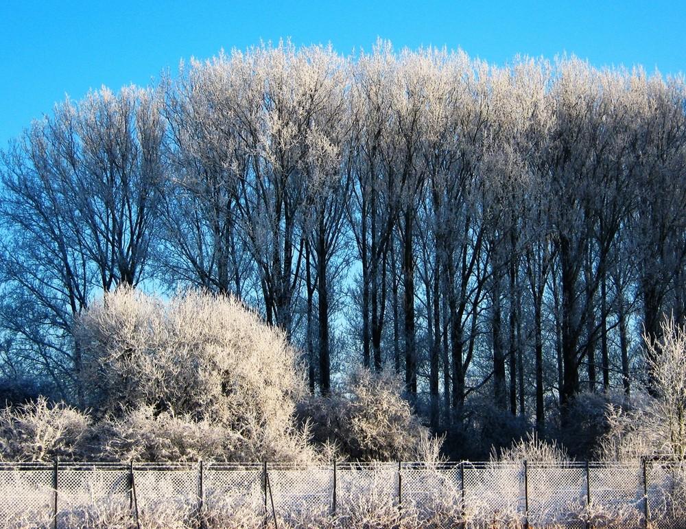 Der Winter steht am Zaun !