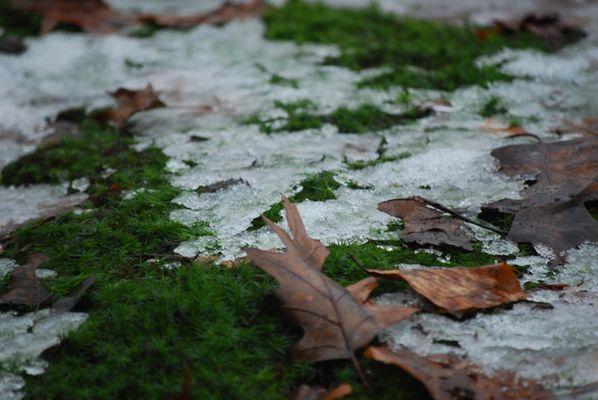 Der Winter zieht sich zurück