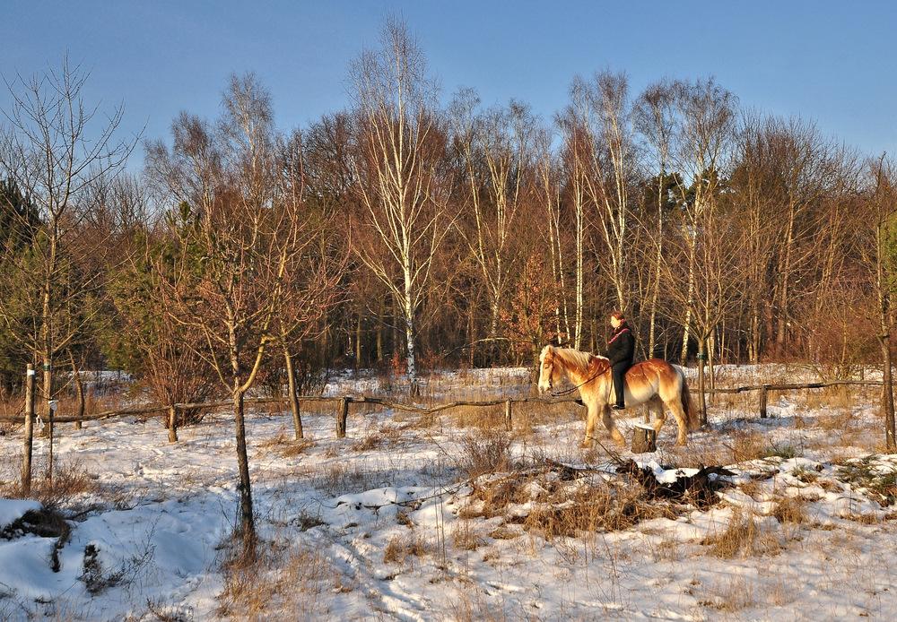 ....... Der winterliche Ausritt.....