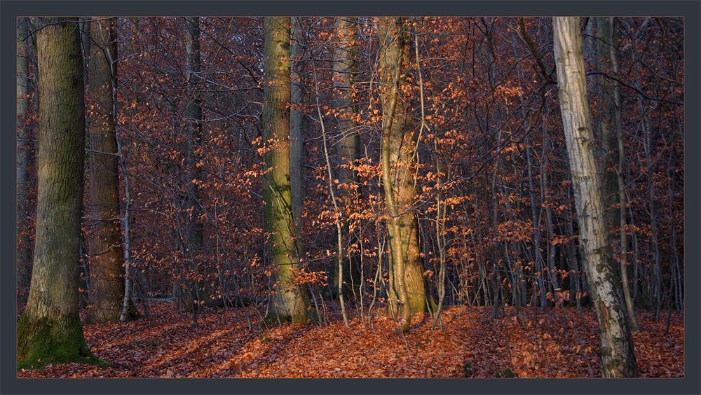 Der Wintermorgensonne-Wald ll