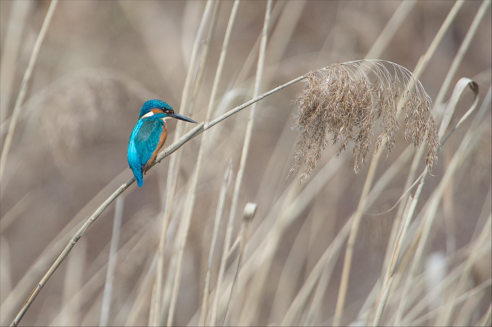 der wohl meist fotografierte Vogel Deutschlands...