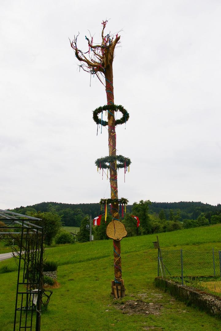 Der wohl skurrilste Maibaum Österreichs