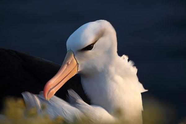 der wohl zur Zeit meist fotografierte Vogel auf Helgoland