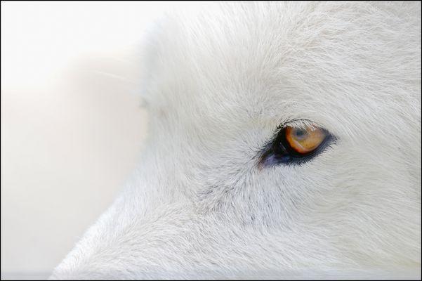 Der Wolf..... er sieht uns auch