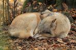 Der Wolf im Sch(L)afspelz ~