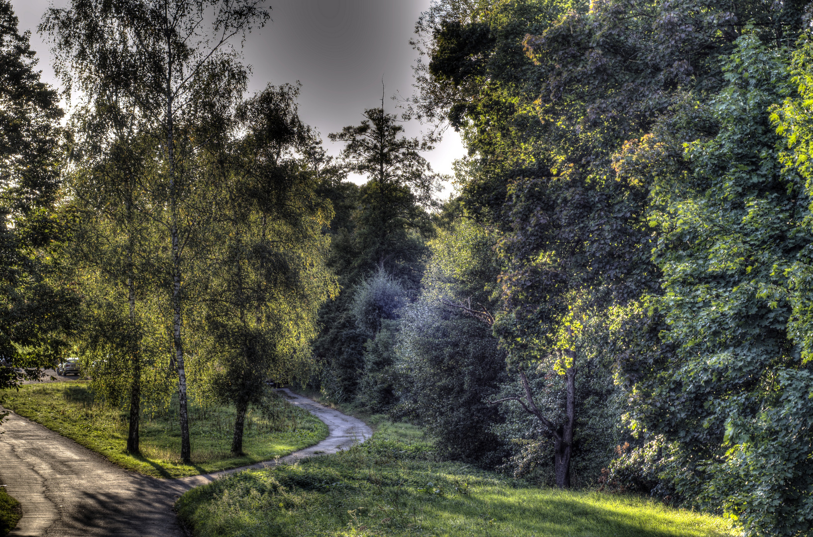 Der Wunderwald