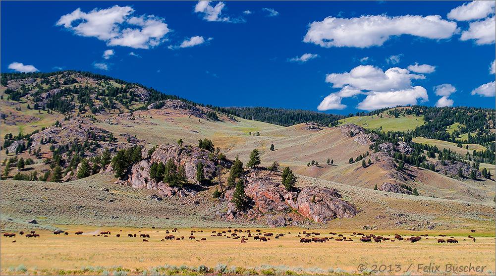 Der Yellowstone-Nationalpark hat Geburtstag!