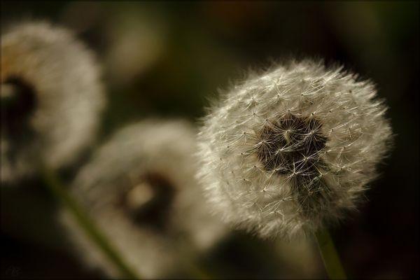 Der Zahnfee liebste Blume...