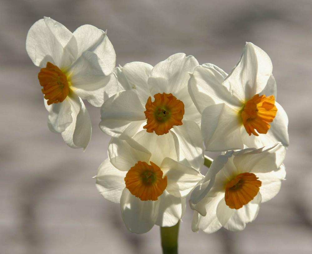 Der zarte Hauch des Frühlings