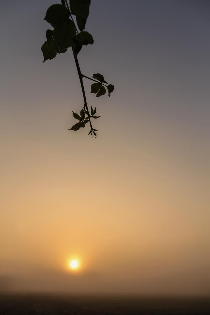 Der zarte Herbstmorgen