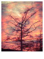 Der Zarte im Sonnenuntergang