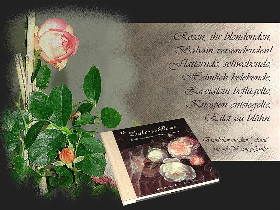Der Zauber der Rose