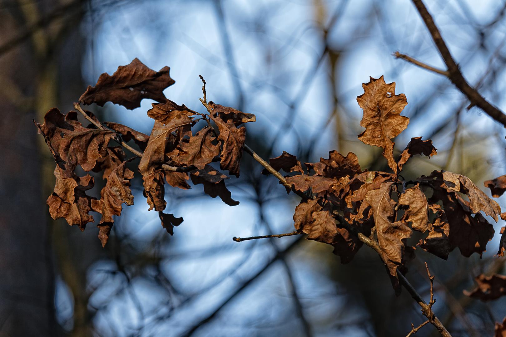 Der Zauber von vertrockneten Blättern