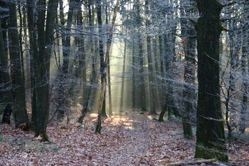 Der Zauberwald