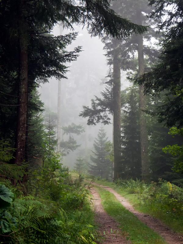 Der Zauberwald I