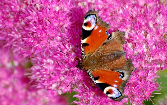 dernier nectar