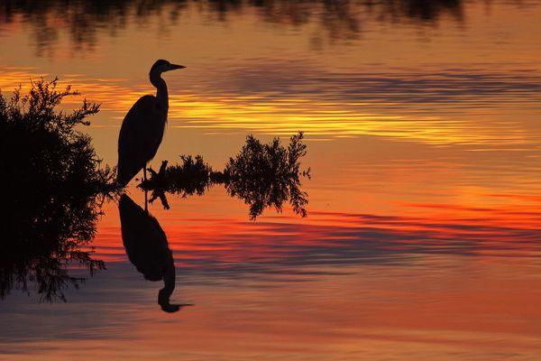 Dernière pêche avant la nuit