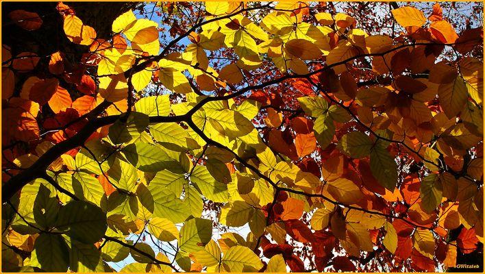 Dernières couleurs avant l'hiver / Die letzten Farben vor dem Winter