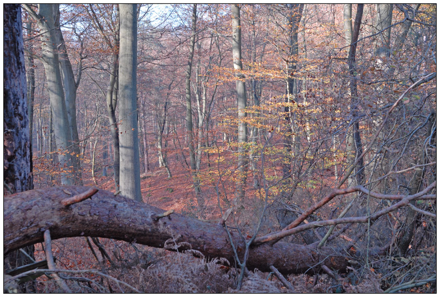 Dernières feuilles d'automne (1)