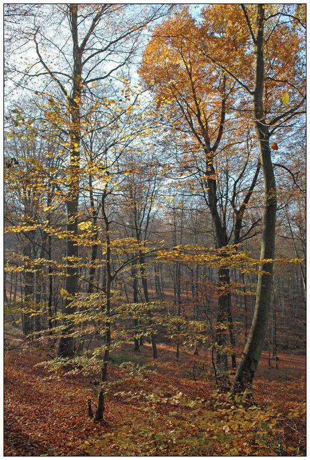 Dernières feuilles d'automne (2)