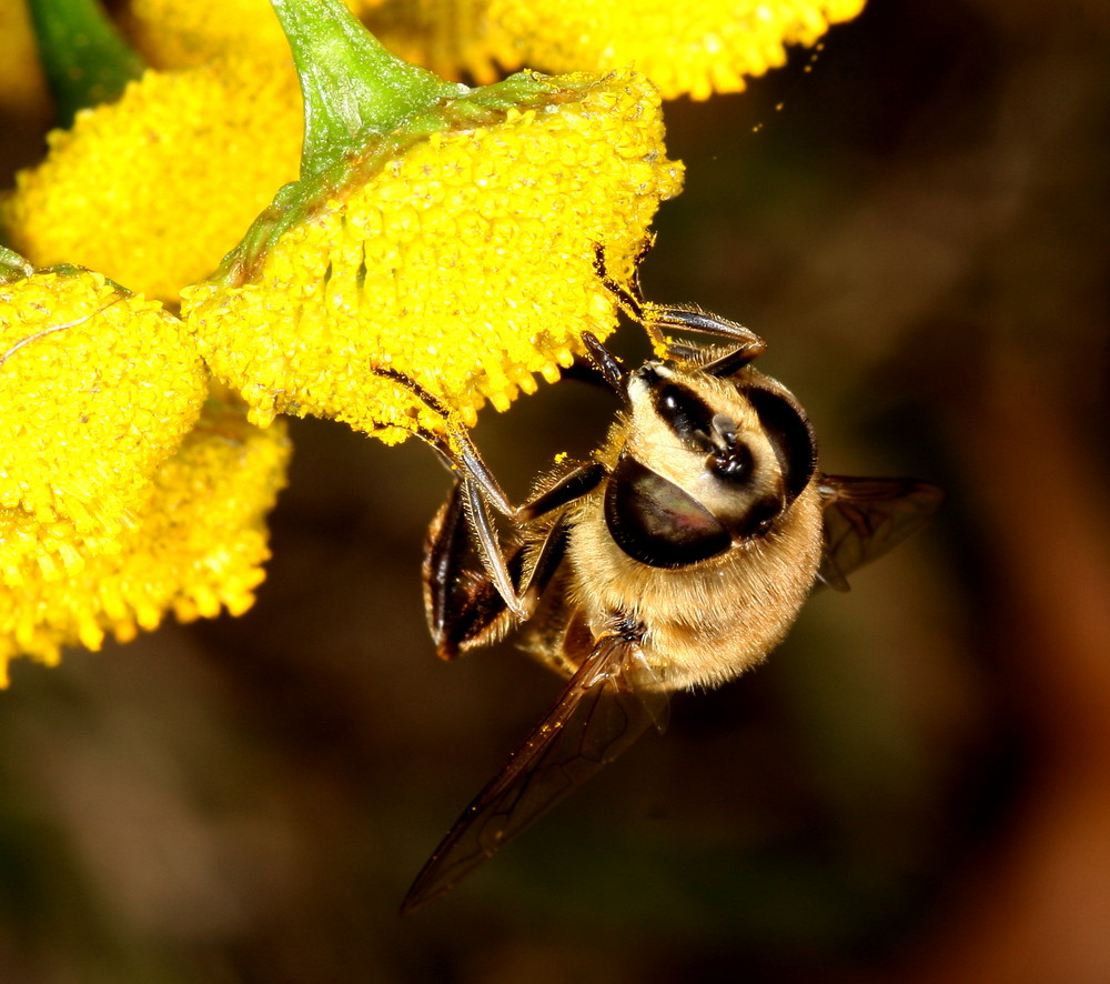 derniers pollens